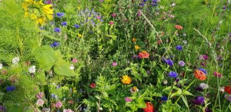 Blomstereng og blandinger