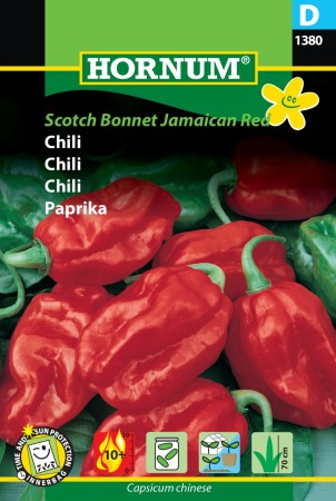 Chili 'Scotch Bonnet Jamaican Red' (Capsicum chinese)