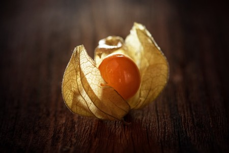 Physalis / Ananaskirsebær