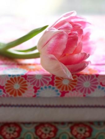 Tulipan Doble Tidlige